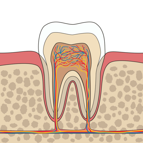 Imagen gráfica de endodoncia - Dentista Guadix